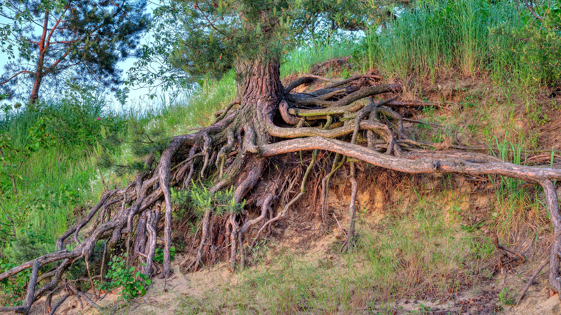 roots protecting from erosion